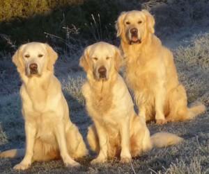 Alle drei im Sonnenaufgang groß